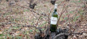 Wijnbericht Vino - Foto 4
